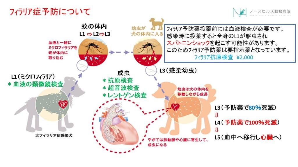 フィラリア予防薬1